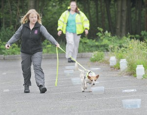 Crush the poop-smelling dog leads handler Aryn Hervel to a container that the dog identified as containing evidence of human-sourced effluent. Scott Terrell / Skagit Valley Herald