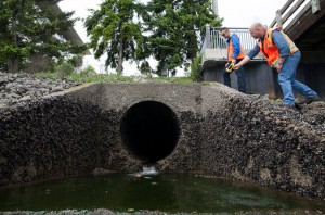 Workers for the Center for Urban Waters examining a storm-water outlet in Tacoma, Wash., as part of pollution monitoring. Credit Matthew Ryan Williams for The New York Times