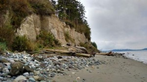 Feeder bluff and beach at Fort Flagler Historical State Park. Marrowstone Island, WA. Photo: Kris Symer (CC BY-NC-ND 4.0)