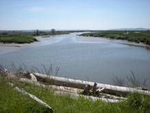 Restored Chinook habitat at Fir Island Farms Reserve in the Skagit Delta. Photo courtesy of WDFW.