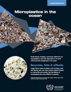 Microplastics in the Ocean: A Global Assessment