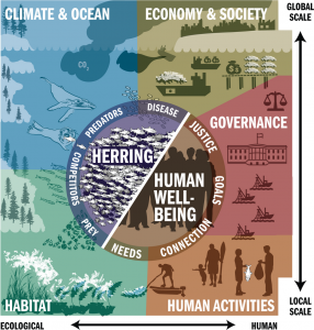 Graphic from 'Thirty-two essential questions for understanding the social–ecological system of forage fish: the case of Pacific Herring'