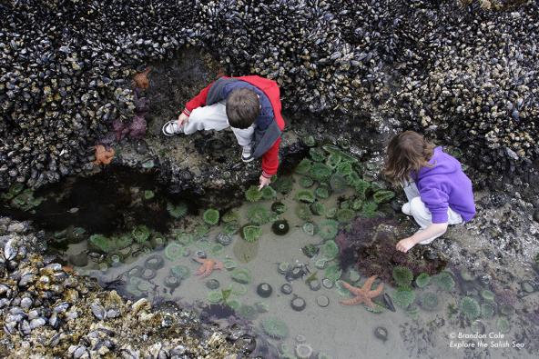 Kids explore a tide pool. Photo by Brandon Cole. All rights reserved. Courtesy of Explore the Salish Sea: A Nature Guide for Kids.