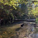 Issaquah Creek. Photo courtesy of Nicholas Georgiadis.