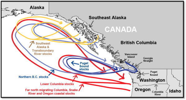 Migratory patterns of major Chinook salmon stock groups. Figure from SEAK biop.