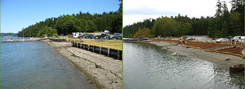 Armor-removal project at Cornet Bay State Park before and after site restoration. Photo courtesy of PSEMP