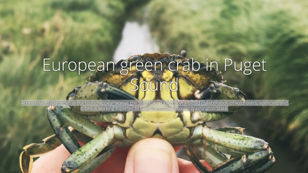 View the European green crab story map at https://arcg.is/4SbC0