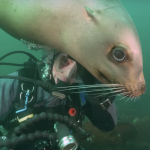 """An image from """"Salish Sea Wild."""" Video courtesy of the SeaDoc Society."""